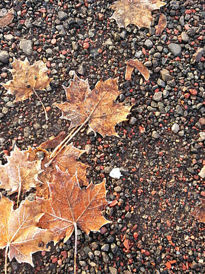 Chilly Leaves 2 Art Print