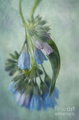 Blumen Photograph - Chiming Bells Part I by Priska Wettstein