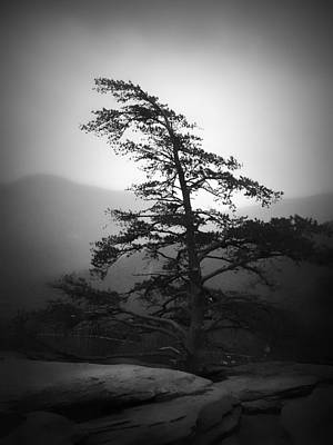 Photograph - Chimney Rock Lone Tree In Black And White by Kelly Hazel