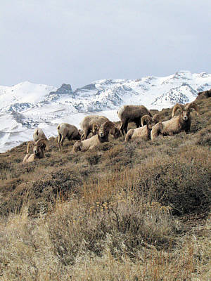 Chimney Rock Rams Art Print