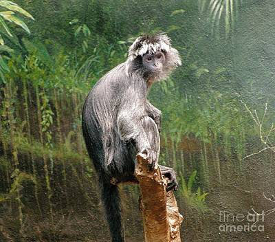 Chimpanzee Digital Art - Chimpanzee At Rest by Anthony Morretta