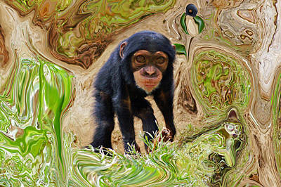 Photograph - Chimpanzee by Daniele Smith