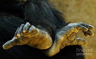 Chimpanzee Feet Art Print