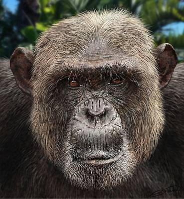 Chimpanzee Digital Art - Chimpanzee Male by Owen Bell