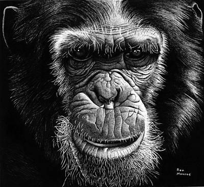 Chimpanzee Drawing - Chimpanzee by Ron Monroe