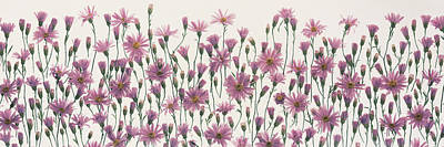 Flower Blooms Photograph - China Asters by Panoramic Images