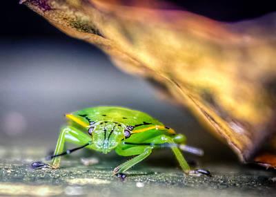 Stink Bug Digital Art - Chinavia Hilaris by Rob Sellers
