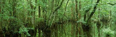Assateague Island Photograph - Chincoteague National Wildlife Refuge by Panoramic Images