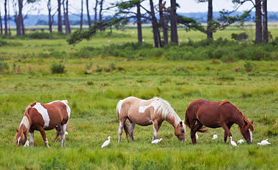 Photograph - Chincoteague Ponies by Melinda Fawver