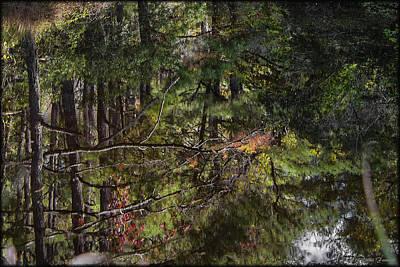 Photograph - Chincoteague Reflection by Erika Fawcett