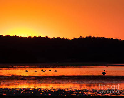 Photograph - Chincoteague Sunset by Dale Nelson