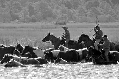 Photograph - Chincoteague Wild Pony Swim - Black And White by Kim Bemis