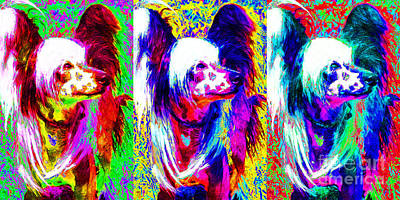 Photograph - Chinese Crested Dog Three 20130125 by Wingsdomain Art and Photography