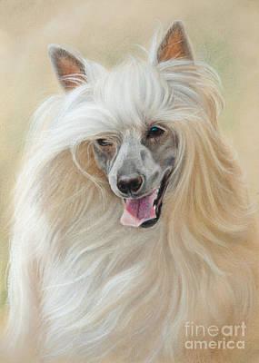 Dog Drawing - Chinese Crested Dog by Tobiasz Stefaniak