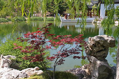 Chinese Red Maple Tree Photograph - Chinese Garden by Denise Mazzocco