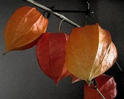 Chinese Lantern Plant At  Midnight Art Print by Patricia E Sundik