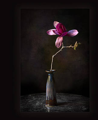 Photograph - Chinese Magnolia In Vase by Endre Balogh