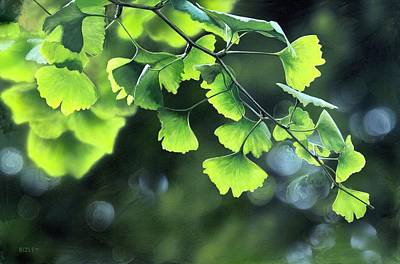 Gingko Wall Art - Photograph - Chinese Maidenhair Tree (ginkgo Biloba) by Richard Bizley/science Photo Library