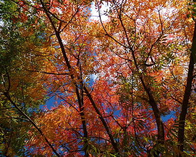 Pistache Tree Photograph - Chinese Pistache Fall Color by Jean Wright