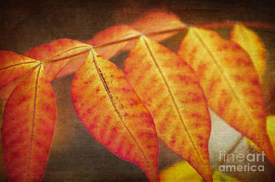 Photograph - Chinese Pistachio Leaves by Tamara Becker