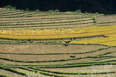 Terracing Photograph - Chinese Terraces by James Brunker
