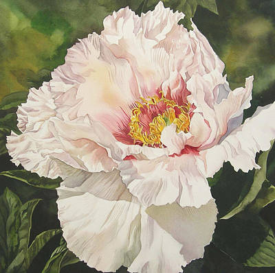 Chinese Tree Peony Art Print by Alfred Ng