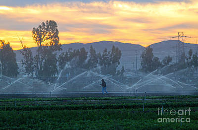 Photograph - Chino Dairy Land by Gregory Dyer