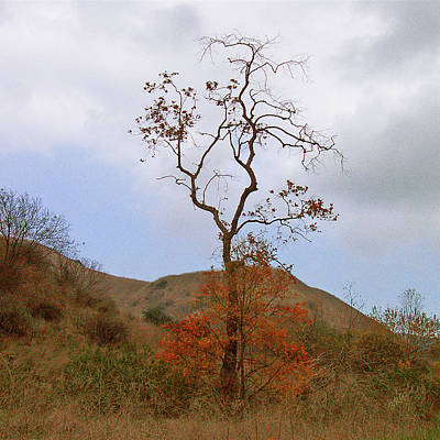 Photograph - Chino Hills Tree by Ben and Raisa Gertsberg