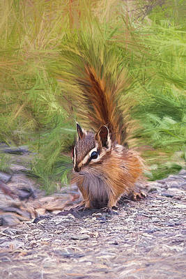 Photograph - Chipmunk Alert Digital Art by Sharon Talson