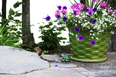 Photograph - Chipmunk And Flowers by Laurel Best
