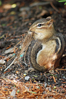Digital Art - Chipmunk And Tail by Eva Kaufman