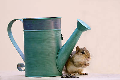 Chipmunk And Watering Can Art Print by Peggy Collins
