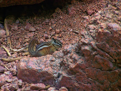 Digital Art - Chipmunk Behind A Piece Of Granite by Chris Flees