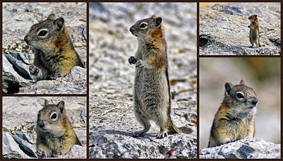 Chipmunk Collage Art Print by Lynn Bolt