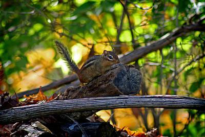 Photograph - Chipmunk In The Woods by Karen Adams