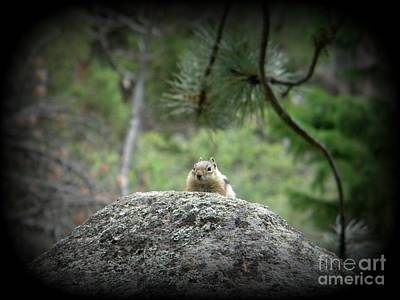 Frizzell Photograph - Chipmunk by Michelle Frizzell-Thompson