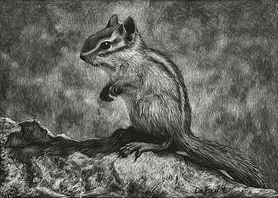 Drawing - Chipmunk On The Rocks by Sandra LaFaut