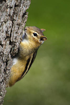 Photograph - Chipmunk On Tree by Christina Rollo