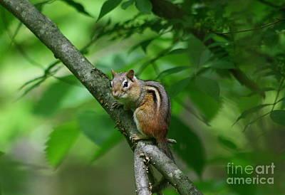 Photograph - Chipmunk Portrait by Neal Eslinger