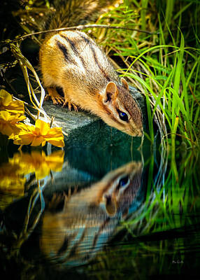 Framed Inspirational Wildlife Photograph - Chipmunk Reflection by Bob Orsillo