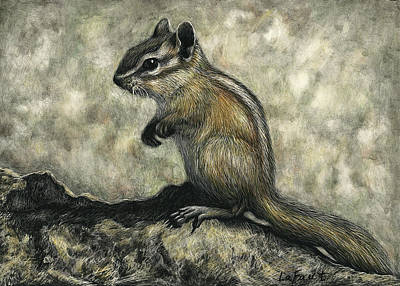Drawing - Chipmunk  by Sandra LaFaut