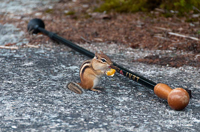 Photograph - Chipmunk by Sharon Seaward