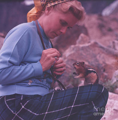 Photograph - Chipmunk by Vintage Photography