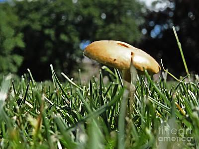Photograph - Chipmunks View Of A Mushroom by Dawn Gari