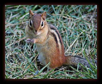 Photograph - Chippy by Michaela Preston
