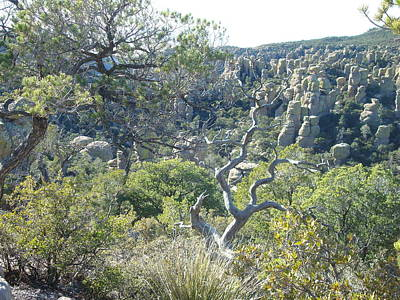 Photograph - Chiricahua National Monument by Susan Woodward