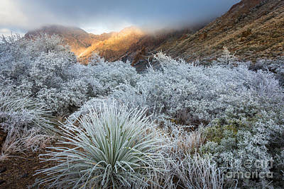 Big Bend Wall Art - Photograph - Chisos Winter Morning by Inge Johnsson