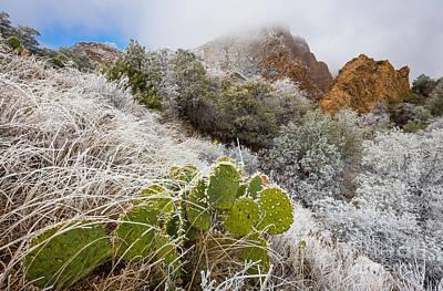 Prickly Photograph - Chisos Winter Wonderland by Inge Johnsson