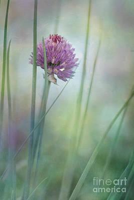 Photograph - Chive Garden by Priska Wettstein