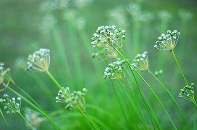 Art Print featuring the photograph Chive Garden by Suzanne Powers